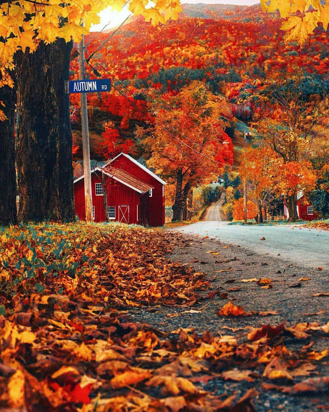 Photo of fall foliage.